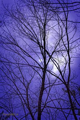 Photograph - Blue Sky by LeeAnn McLaneGoetz McLaneGoetzStudioLLCcom