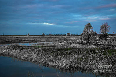 Photograph - Blue Sky Over The Marsh by Tom Claud