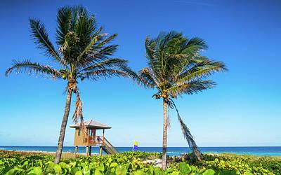 Photograph - Blue Sky Palms Delray Beach Florida by Lawrence S Richardson Jr