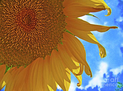 Photograph - Blue Sky Sunflower by George D Gordon III