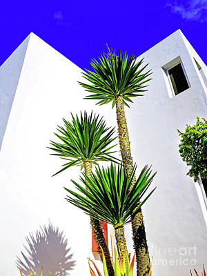 Tall Palms And Blue Sky Art Print by Wilf Doyle