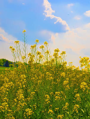 Blue Sky Yellow Flowers Art Print by Bill Cannon
