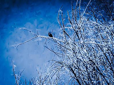 Crow Photograph - Blue Snowy Black Crow by Heather Joyce Morrill