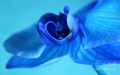 Wet Orchids Photograph - Blue Solitude by Krissy Katsimbras