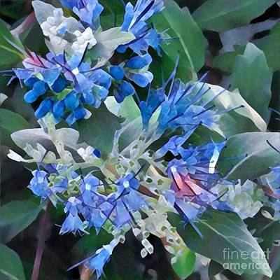 Photograph - Blue Splash - Flowers Of Spring by Miriam Danar