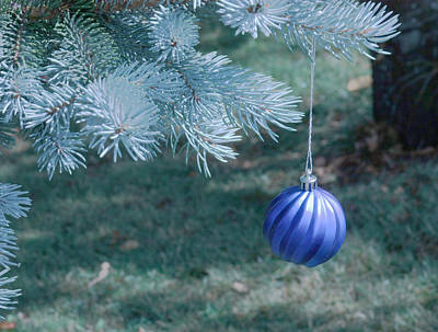 Photograph - Blue Spruce Christmas by Barbara  White