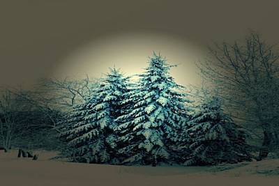 Mixed Media - Blue Spruce-maine Evergreens by Mike Breau