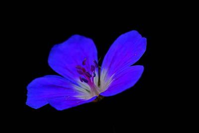 Blue Stamen Art Print