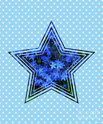 Photograph - Blue Star Flower Star 2 by Joan-Violet Stretch