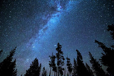 Photograph - Blue Starry Night by James BO Insogna