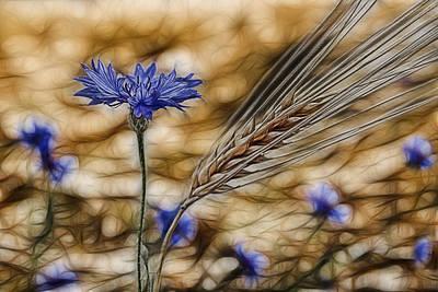 Cornfield Photograph - Blue Stars by Joachim G Pinkawa