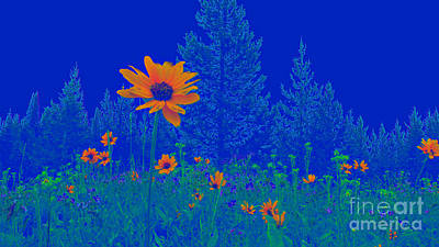Photograph - Blue Summer by Janice Westerberg
