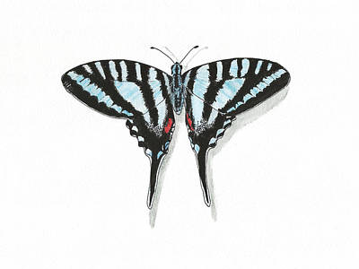 Blue Swallowtail Butterfly Original by Masha Batkova