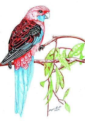 Blue Tail Parrot - Green Day Art Print