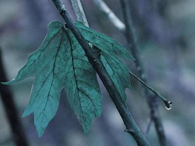 Photograph - Blue Teal Leaf by Patricia Strand