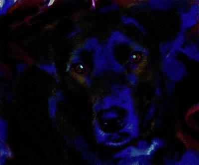 Photograph - Blue The Dog 1 by Kristalin Davis