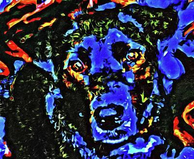 Photograph - Blue The Dog 3 by Kristalin Davis