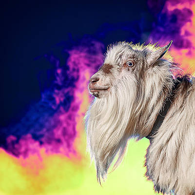 Art Print featuring the photograph Blue The Goat In Fog by TC Morgan