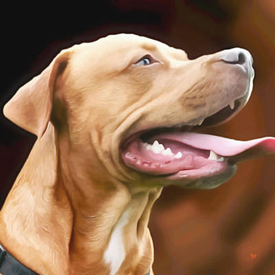 Rhodesian Ridgeback Photograph - Blue The Rhodesian by Isabella F Abbie Shores