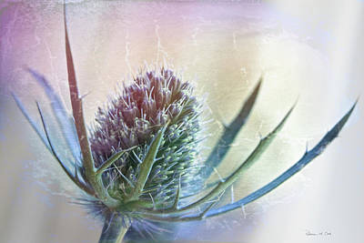 Photograph - Blue Thistle by Bellesouth Studio