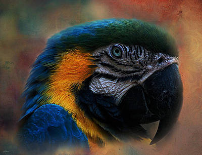 Macaw Mixed Media - Blue Throated Macaw 003 by G Berry