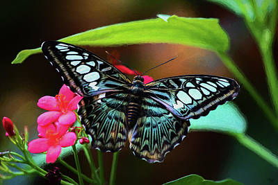 Digital Art - Blue Tiger Striped Butterfly - Painting by Ron Grafe