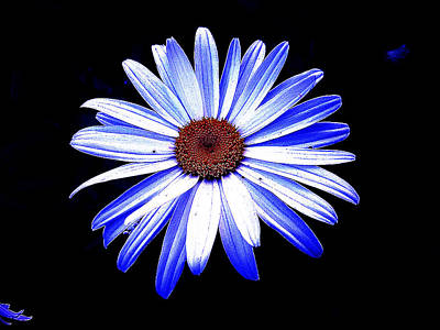 Photograph - Blue Tinted Daisey by George Jones