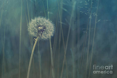 Meadow Photograph - Blue Tinted by Priska Wettstein