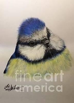 Drawing - Blue Tit by Art By Three Sarah Rebekah Rachel White