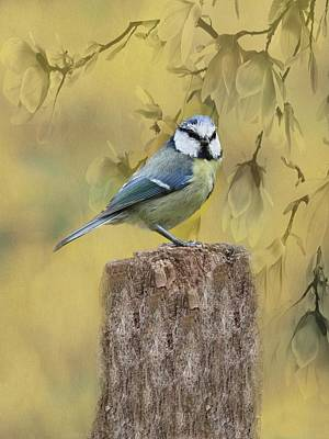 Photograph - Blue Tit Bird II by Movie Poster Prints