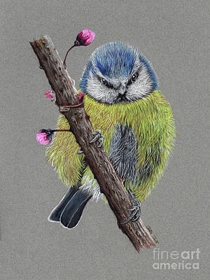 Painting - Blue Tit Finch by Peter Piatt