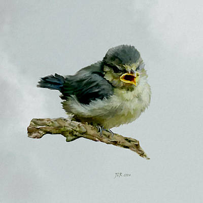 Painting - Blue Tit Fledgeling by Bamalam  Photography