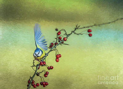 Digital Art - Blue Tit Half-thinking Of Flying Away by Liz Leyden