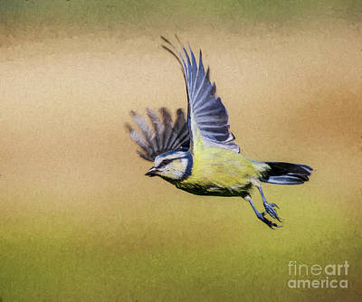Digital Art - Blue Tit In Flight by Liz Leyden