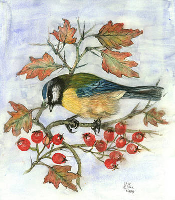 Tits Drawing - Blue Tit On Hawthorn by Nell Hill