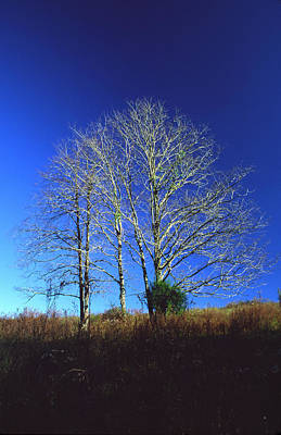 Photograph - Blue Tree In Tennessee by Randy Oberg