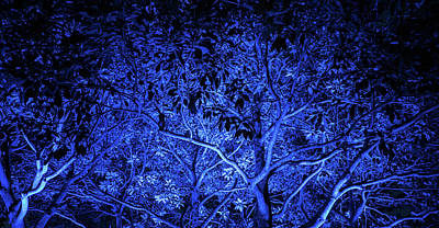 Photograph - Blue Trees by Jocelyn Kahawai