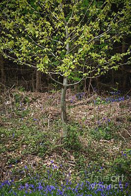 Bracken Fern Photograph - Blue Trimming by Richard Thomas