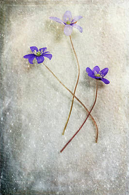 Photograph - Blue Trio by Randi Grace Nilsberg