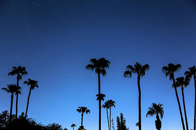 Photograph - Blue Tropical Night by James BO Insogna