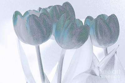 Photograph - Blue Tulips by Karen Lewis