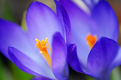 Photograph - Blue Twins by Larry Ricker