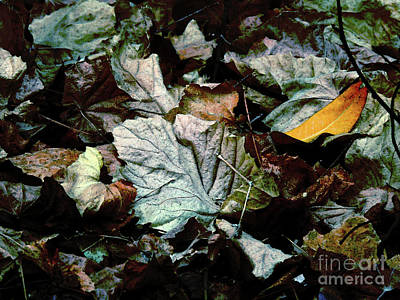Photograph - Blue Velvet by Robert Ball