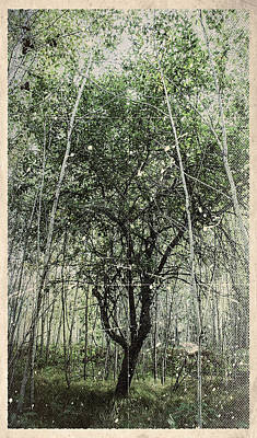 Photograph - Blue Vintage Hand Of God Apple Tree by Christina VanGinkel