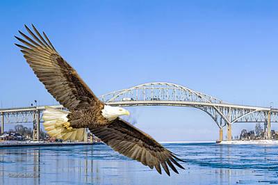 Photograph - Blue Water American Bald Eagle by LeeAnn McLaneGoetz McLaneGoetzStudioLLCcom