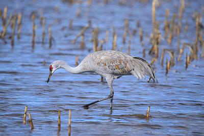 Photograph - Blue Water Crane by Lynn Hopwood