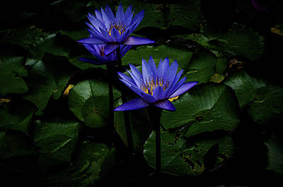 Photograph - Blue Water Lily by Joseph Hollingsworth