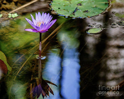 Blue Water Lily Art Print