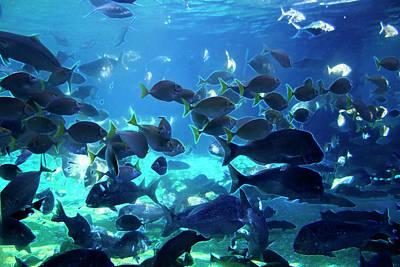 Photograph - Blue Waters Of Sea World by Miroslava Jurcik