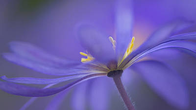 Anemone Photograph - Blue Waves by Penny Myles